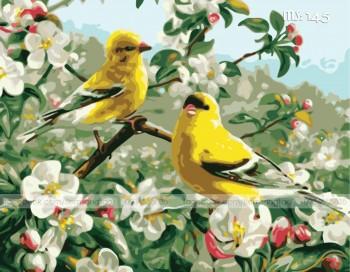 Tranh tô màu chim vàng mùa xuân 145